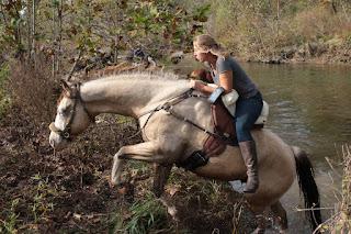 feeding a pssm 1 horse, feeding a sugar sensitive horse, PSSM1 Horse Jax