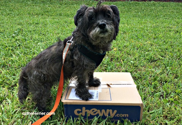 Oz receives Stella & Chewys raw food from Chewy.com