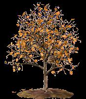 Árvore outono em png