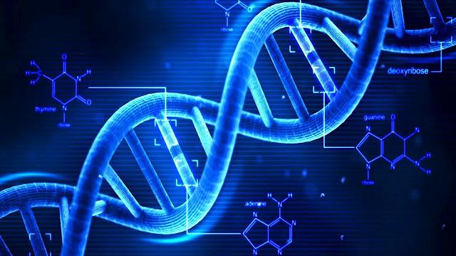 Sifat dasar Gen