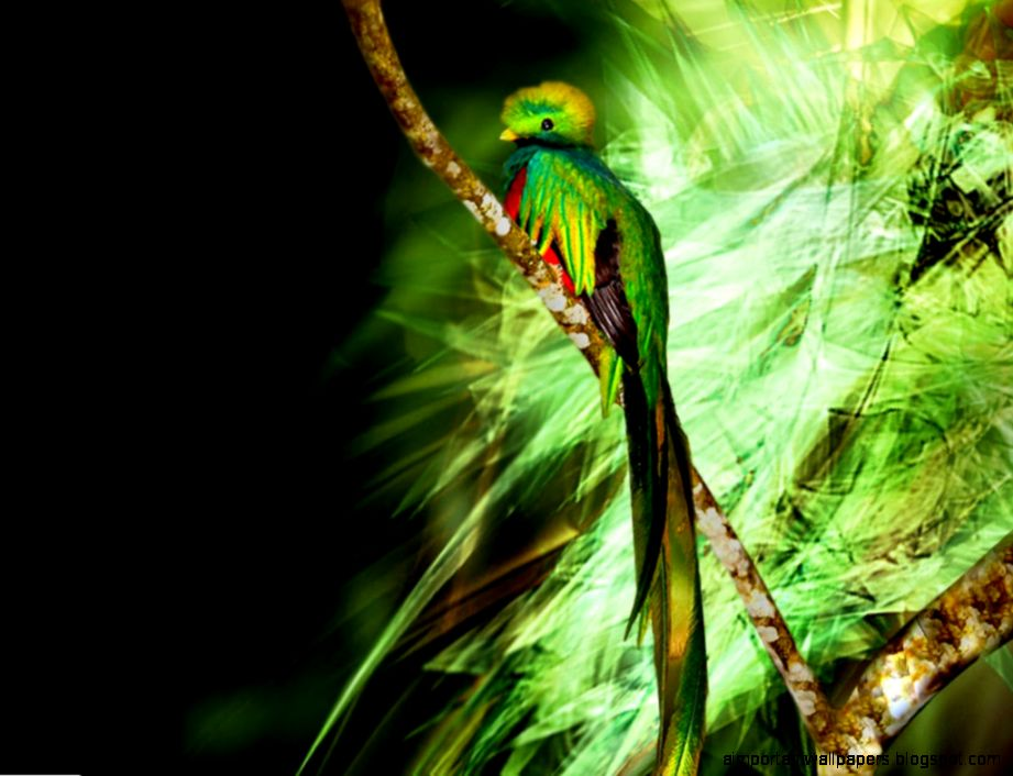 The Quetzal Hd Wallpapers Important Wallpapers