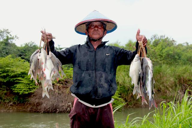 Umpan Pancing Terbaik Jitu Ikan Tawes Terbaru