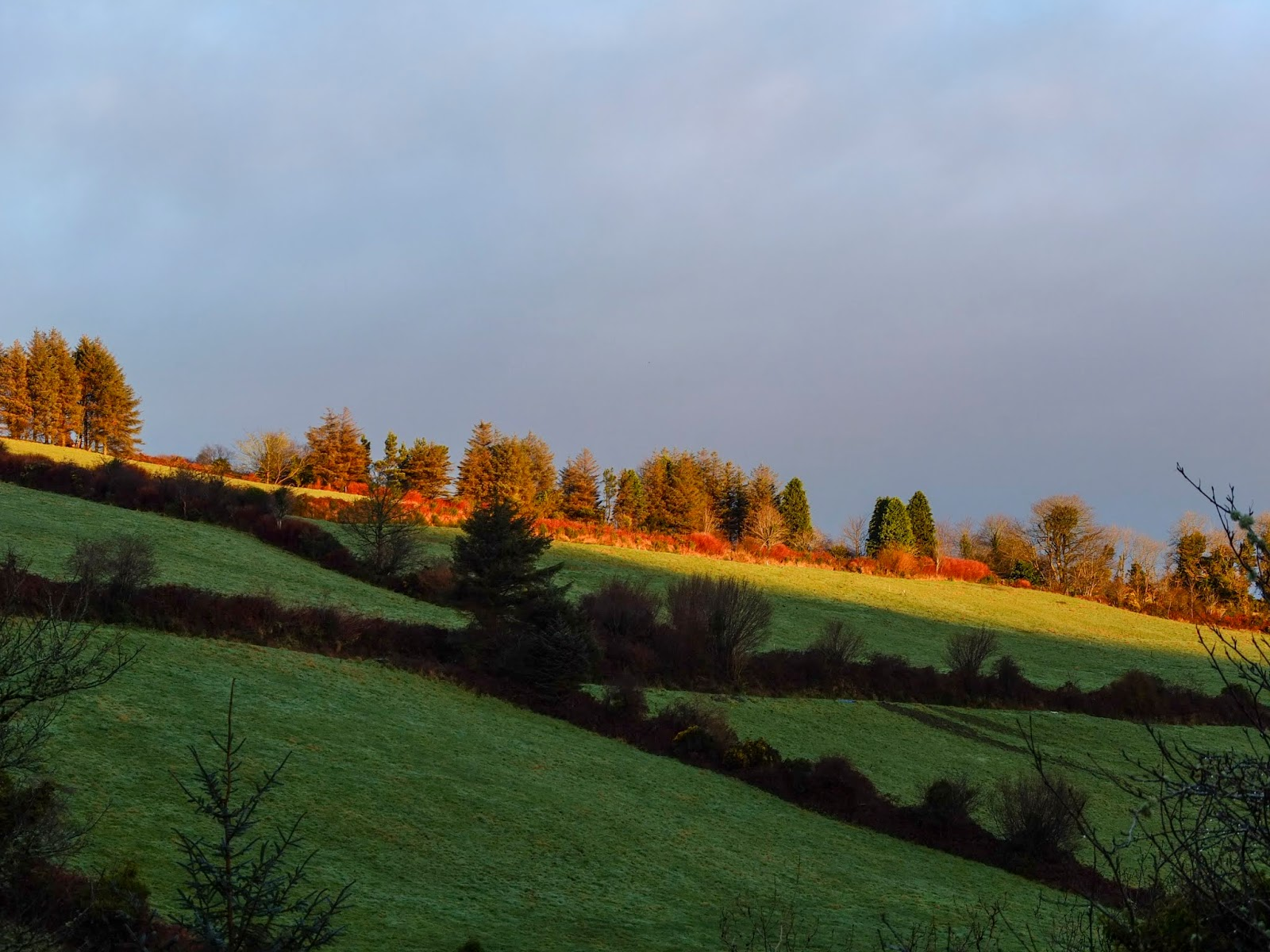 A sunshine beam on the top of a hillside and some trees in the Boggeragh Mountains.