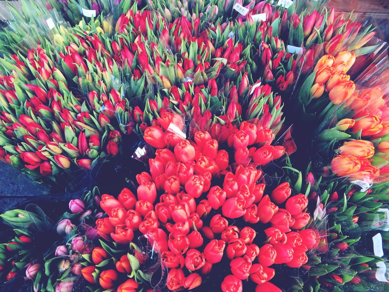 tulppaani, tulppaanit, tulips, spring