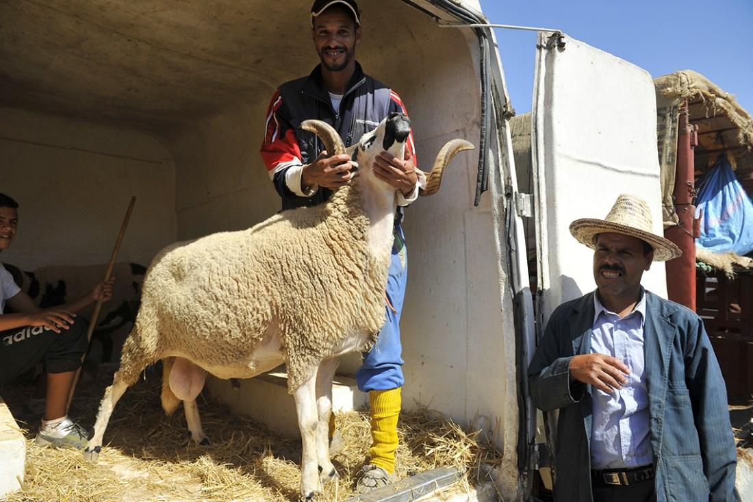 رسميا..هذا هو يوم عيد الأضحى بالمغرب