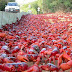 The Red Crab Migration