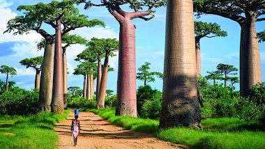 Travel Diaries from Madagascar