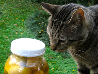 Josef sniffs a jar of citrus vinegar