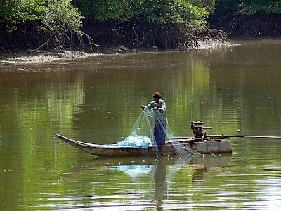 Fishing in the mangroves
