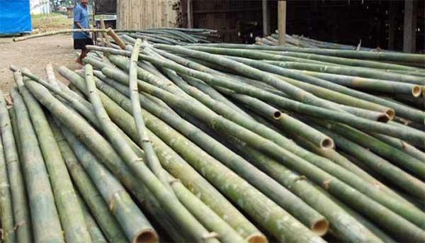 Sukses Berkat Potongan Bambu