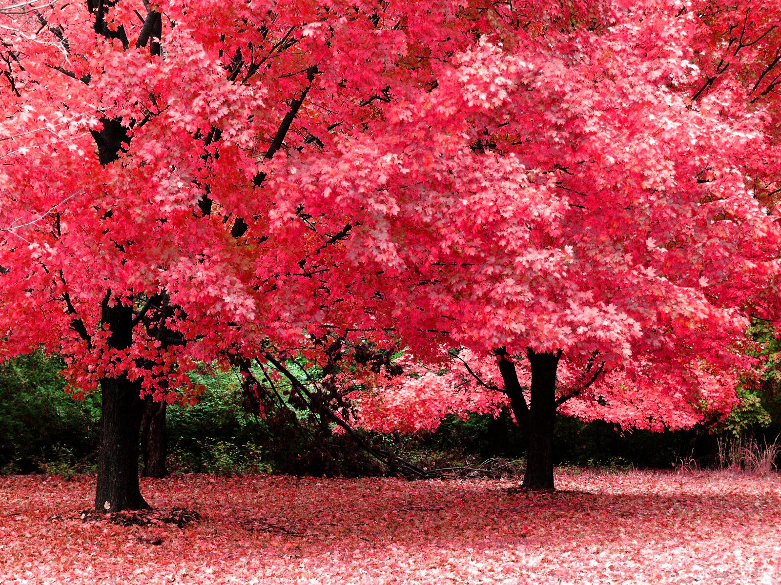 Autumn Vanilla Picture Autumn Screensavers