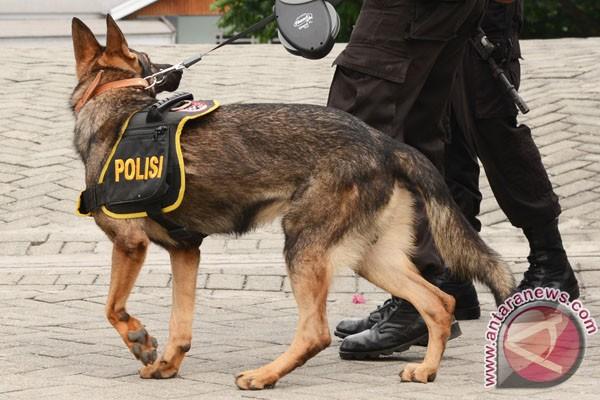 مواطن عراقي تبرع بشراء عشرات الكلاب البوليسية لوزارة الداخلية العراقية