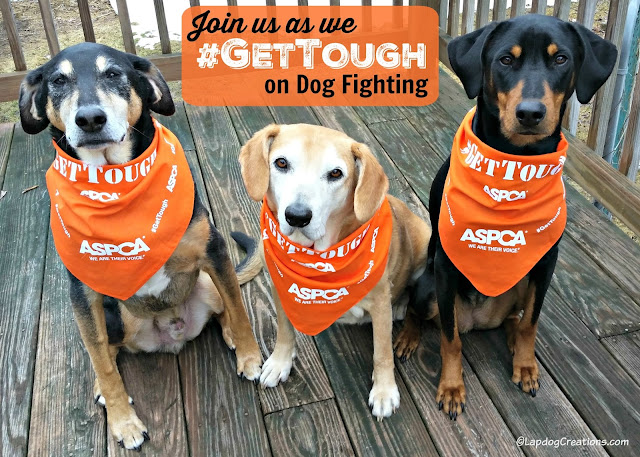3 rescued dogs wearing ASPCA bandanas