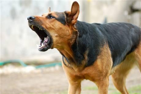 भोंकते कुत्ते के साथ कैसे डील करनी चाहिए एक मजेदार जोक