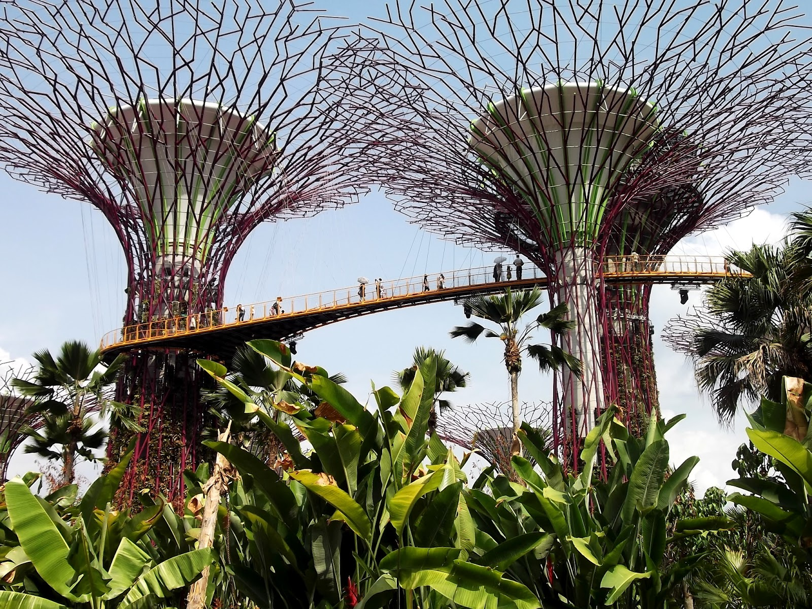 c cile singapour gardens by the bay ils sont fous ces singapouriens. Black Bedroom Furniture Sets. Home Design Ideas