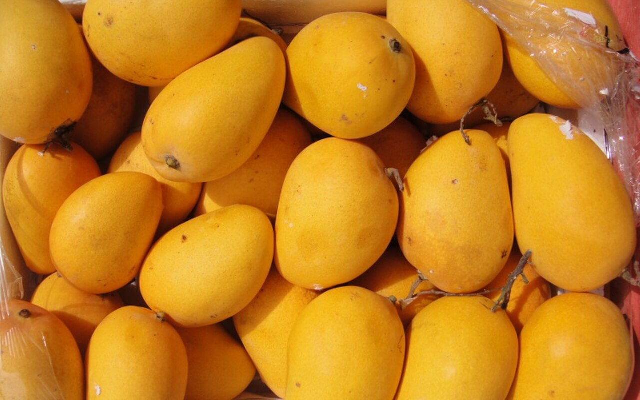 Free Download Mango Wallpaper Images In High Resolution Free New