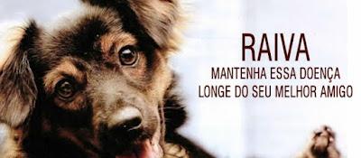 Saúde da Ilha anuncia datas e locais de vacinação antirrábica para cães e gatos