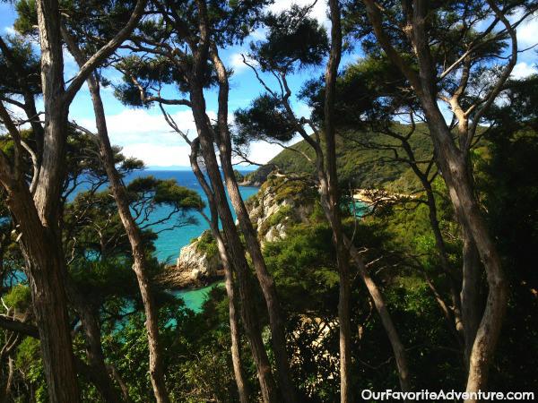 Waipoau Forest's Kaouri Trees
