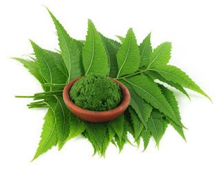 menghialngkan jerawat dengan neem ( daun mimba ), rid acne with neem