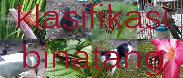 Klasifikasi Kelompok Binatang