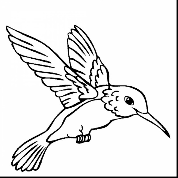 Beautiful Hummingbird Coloring Pages For Kids With Hummingbird Coloring  Pages And Ruby Throated Hummingbird Coloring Pages