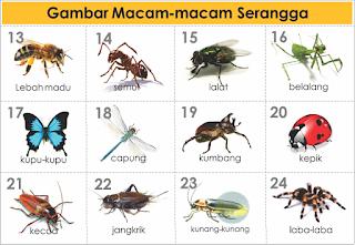 Macam Macam Jenis Serangga dan Nama Latinnya