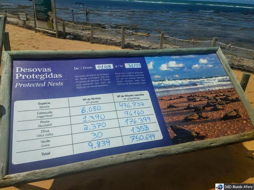 desovas protegidas Projeto Tamar - Praia do Forte (Bahia)
