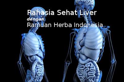 Rahasia Sehat Liver dengan Ramuan Herba Indonesia