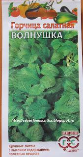 Горчица салатная -  витаминная зелень