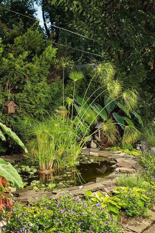 Over 20 Shade Loving Perennials  & Annuals