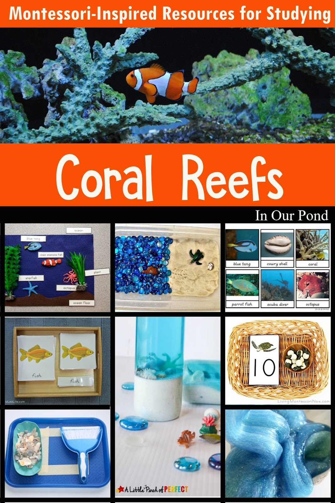 Montessori Inspired Printables For Studying Coral Reefs