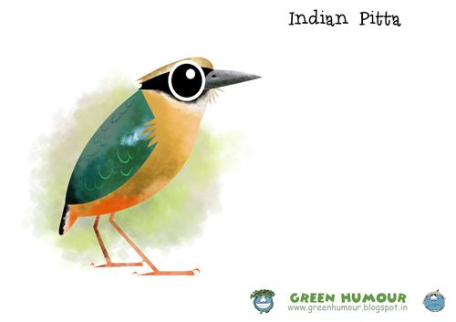 Green Humour Bird Caricatures