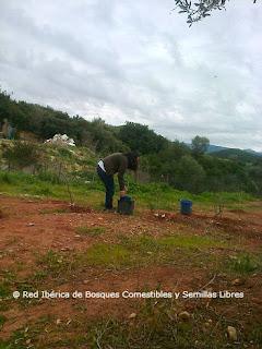 semillas libres y bosques de alimentos