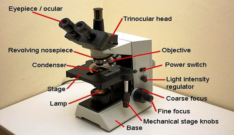 The Part Of Microscope