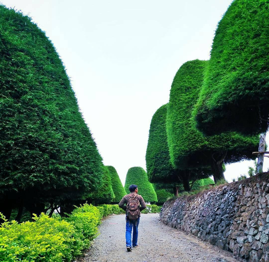 HTM Wisata Bukit Jamur Rancabolang Ciwidey