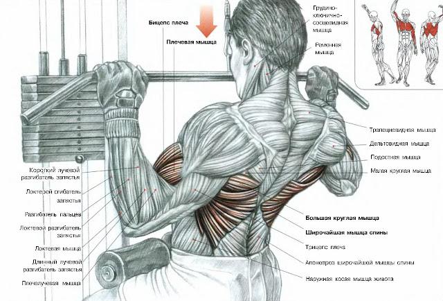 тяга у вертикального блока на мышцы спины
