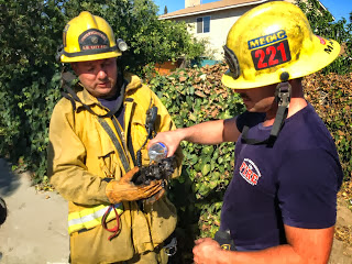 SBCFD Rescue Kitten During Structure Fire