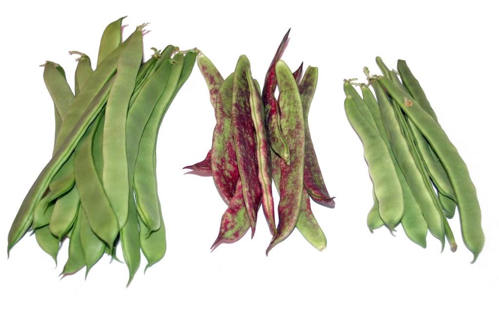 Frutas y hortalizas jud a verde la verdura de los mil - Como preparar unas judias verdes ...