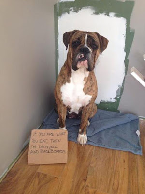 Funny Dog Shaming : Sorry that i ate the wall