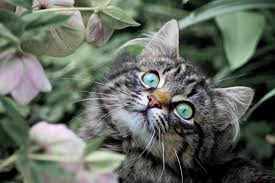 How Can Rabies Hurt Your Cat?