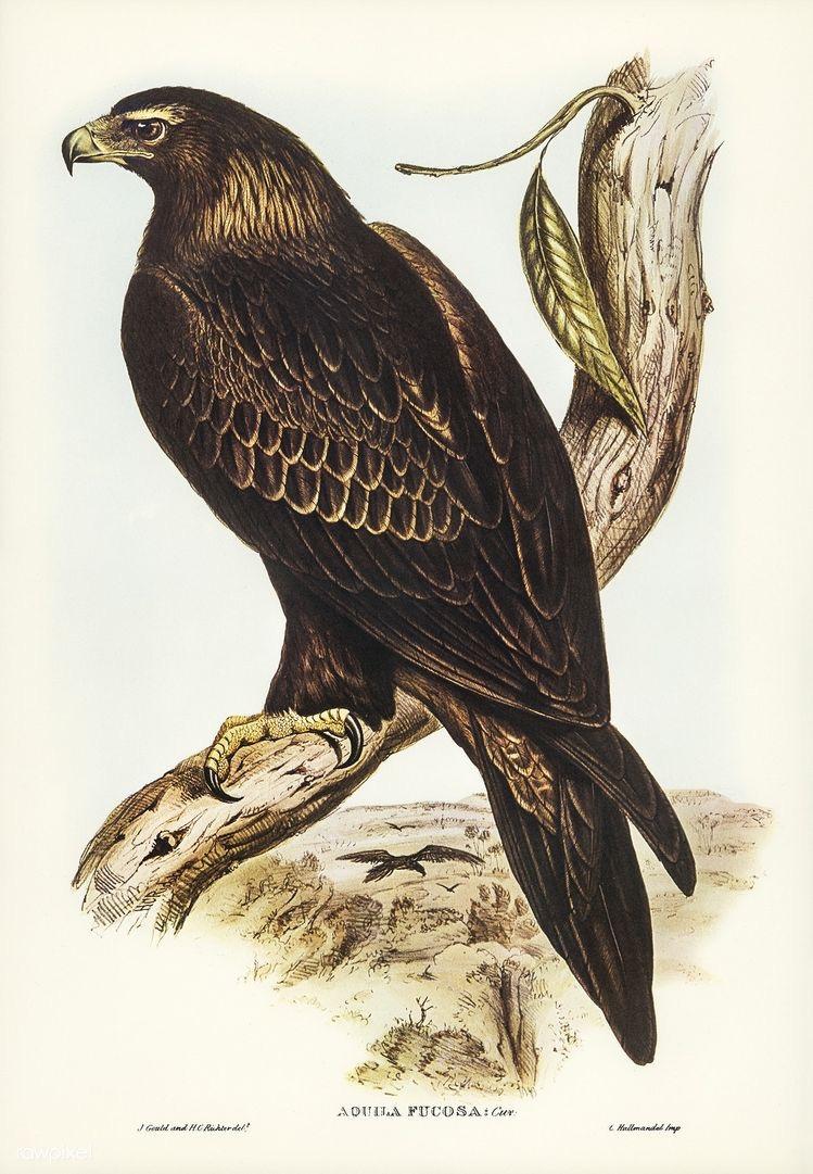 Aves em Incríveis Ilustrações