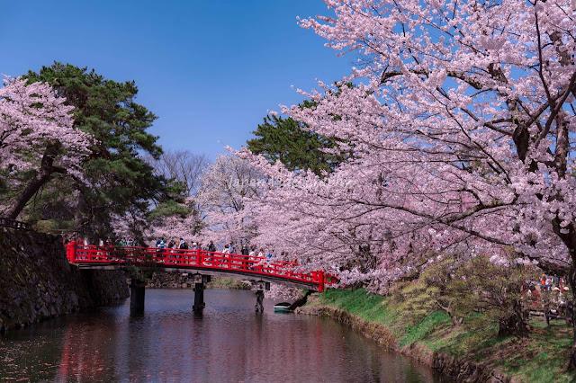 Cuối cùng, không thể không nhắc đến quê hương của hoa anh đào, đất nước nổi tiếng với phong tục hanami (phong tục chiêm ngưỡng vẻ đẹp thanh tao của hoa anh đào). Mặc dù bạn sẽ tìm thấy hoa anh đào trên khắp đất nước này nhưng Kyoto là một trong những thành phố đáng để đặt chân đến nếu là một fan của loài hoa mùa Xuân.     Cố đô của Nhật Bản có những địa điểm ngắm hoa không thể bỏ qua như Con đường triết gia – nơi men theo một con kênh với hàng trăm cây anh đào đua nở và công viên Maruyama nổi tiếng với những cây anh đào cực kỳ hoành tráng.