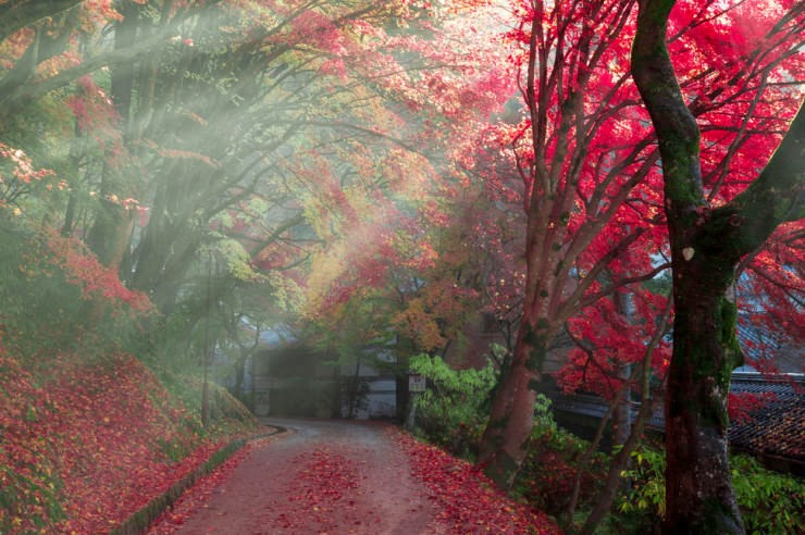 29. Autumn in Japan - 29 Most Romantic Alleys to Hike
