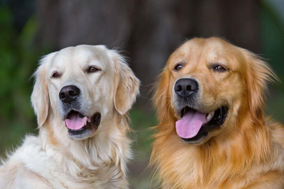 تفسير حلم رؤية الكلاب في المنام لابن سيرين