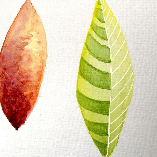 Abstract leaves drawn depicting contrast in texture and colors. Drawn in aquarelle by Boriana Giormova