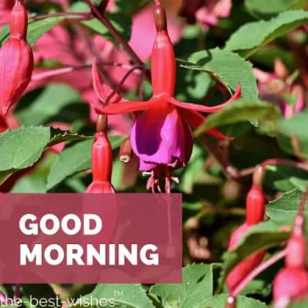 flowers by picture of fuchsia crocosmia