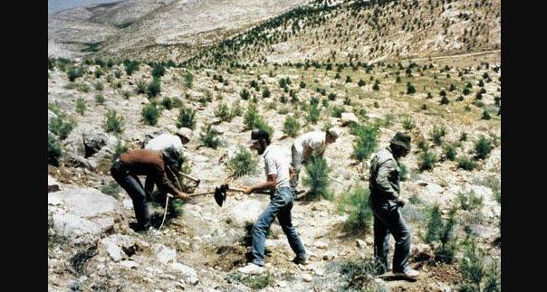 menanam pohon israel