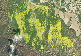 California's Wildflower Super Bloom seen from Space
