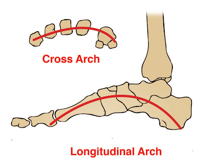 Longitudinal and Transverse Arches of the Foot - El Paso Chiropractor