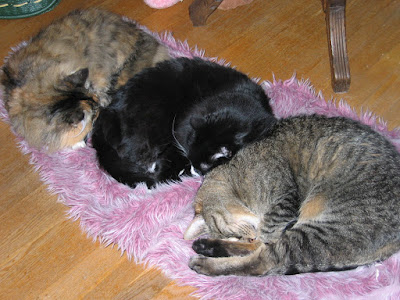 Three cats sharing the same bed